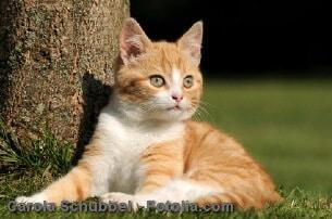 Katze hat Haarausfall – Gründe für starken Fellverlust bei Katzen