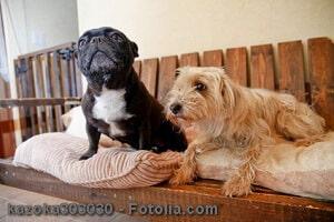 Haustiere in Mietwohnung – sind Hunde und Katzen in einer Mietwohnung erlaubt?
