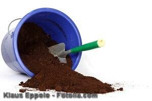 Kaffeesatz als Dünger verwenden – Tipps und Hilfe