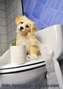 Hunde stubenrein bekommen – Tipps und Hilfsmittel