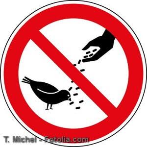 Tauben vertreiben – Tipps zur Balkonabwehr