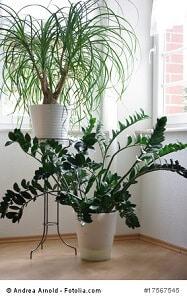 Grünpflanzen im Schlafzimmer - schädlich oder nicht?