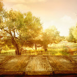 Olivenholz pflegen