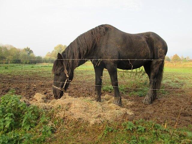 Pferde mit Heu und Stroh füttern