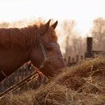 Pferdefutter Ratgeber