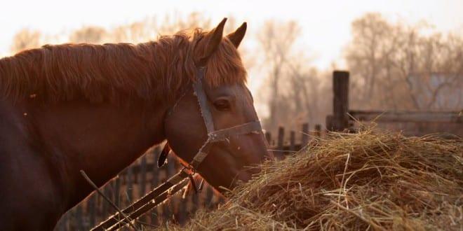 Pferdefutter: Wie ernähre ich mein Pferd richtig?
