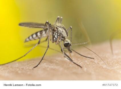 Stechmücken, Wespen und sonstige Insekten im Sommer abwehren