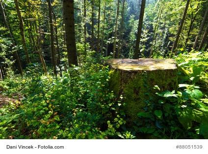 So Entfernen Sie Baumstumpfe Richtig
