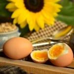 das perfekte Ei