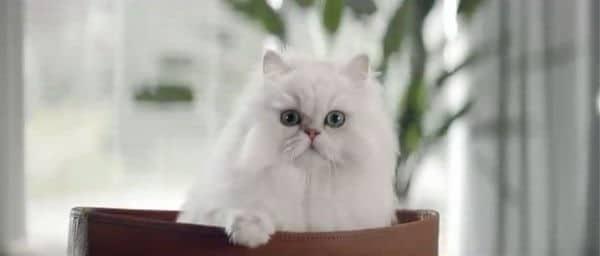 Restaurant-Gutscheine beim Kauf vom Gourmet Katzenfutter von Purina