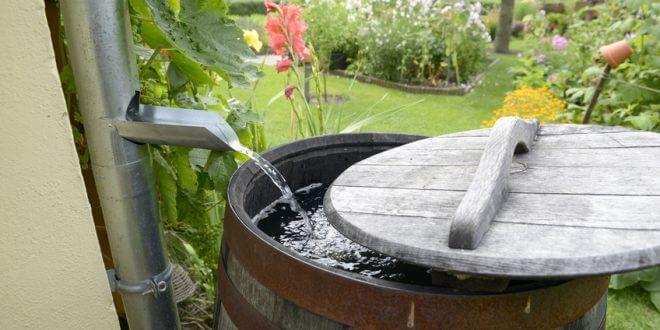 Regenwasser richtig nutzen und damit bares Geld sparen