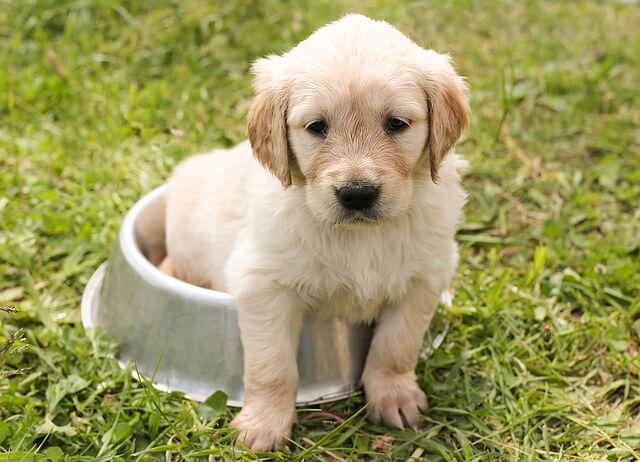 Empfindliche Hundemägen – getreidefreies Hundefutter kann helfen