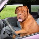 Hund, Auto