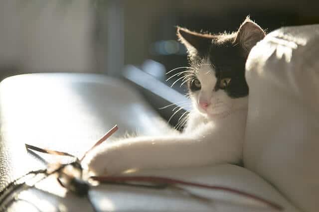 Katzen fördern und fordern mit DIY Katzenspielzeug