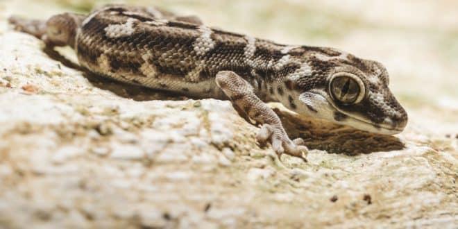 Reptilienfreunde aufgepasst – so gelingt der Einstieg in die Terraristik