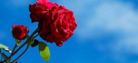 Ohne eine große Blumenvielfalt kann ein schöner Garten nicht glänzen und aufblühen