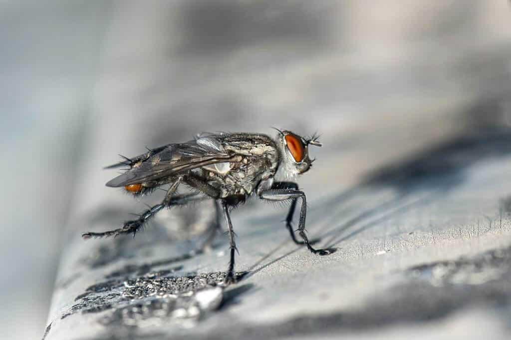 Unerwünschte Gäste fernhalten – so sorgen Sie für wirksamen Insektenschutz in den eigenen vier Wänden