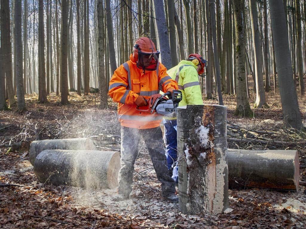 Vom Stammholz zum Scheitholz: Brennholz selber machen