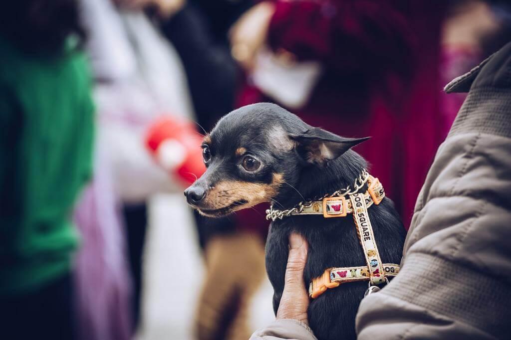 5 wertvolle Tipps für die Hundeerziehung von Welpen