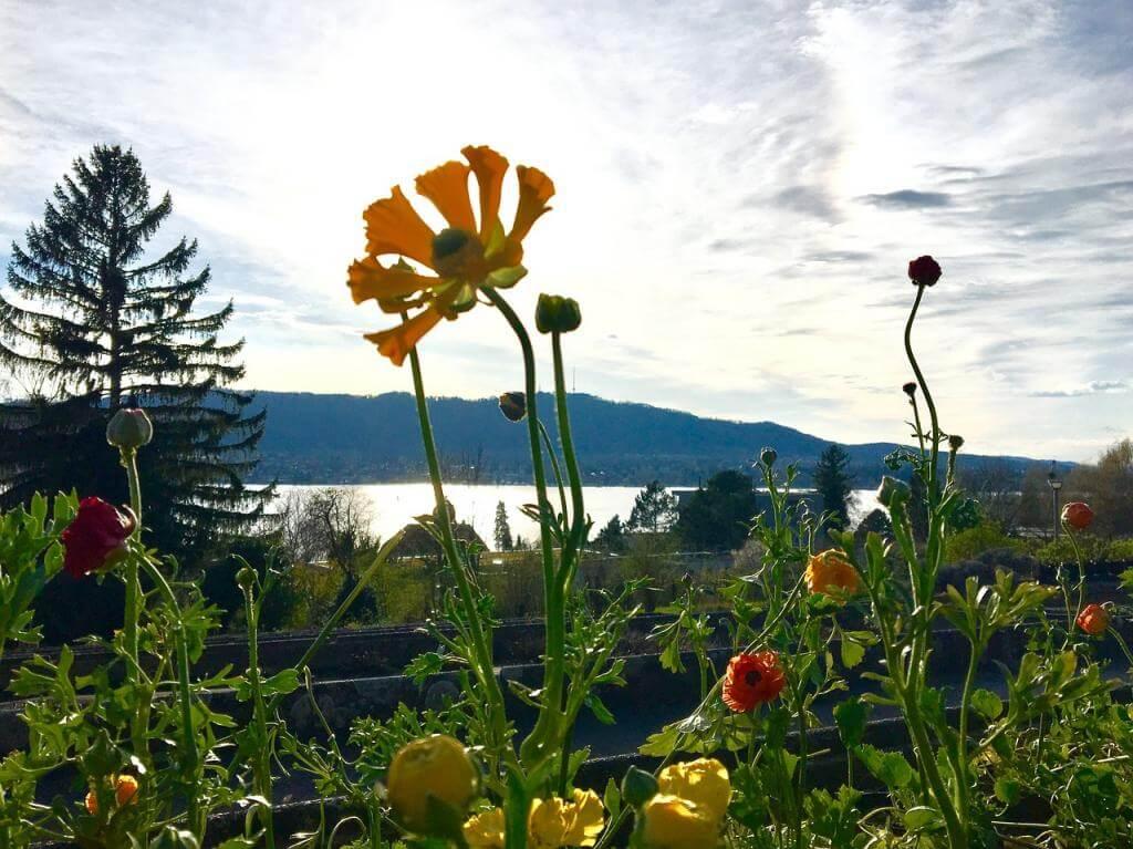 Garten, Hügel