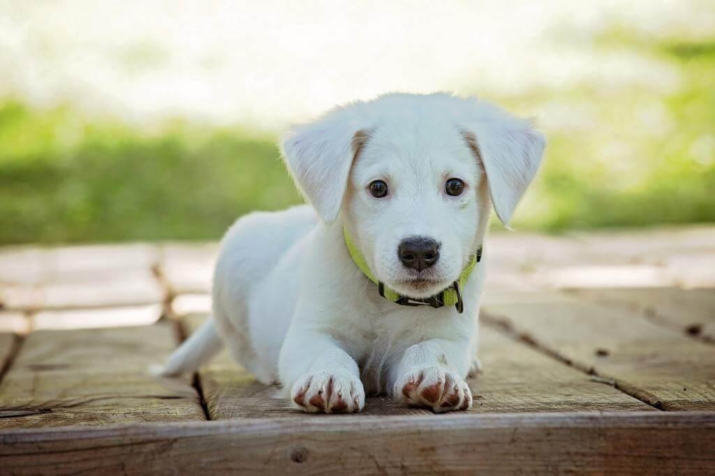 Ein Hund zieht ein: So gewöhnen Sie den Vierbeiner an das neue Zuhause