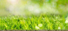 Rasen mit der Motorhacke umgraben – das richtige Gerät für Ihren Zweck