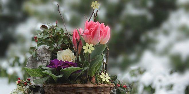 flowers-3135847