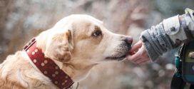 Ratgeber Hunde: Wie teuer ist ein Tierarzt?
