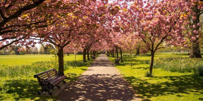 Bodeninjektion: Verbesserung der Bodenqualität für Bäume
