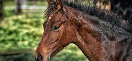 Pferdeversicherung: Welche Absicherung benötigen Pferd und Reiter?