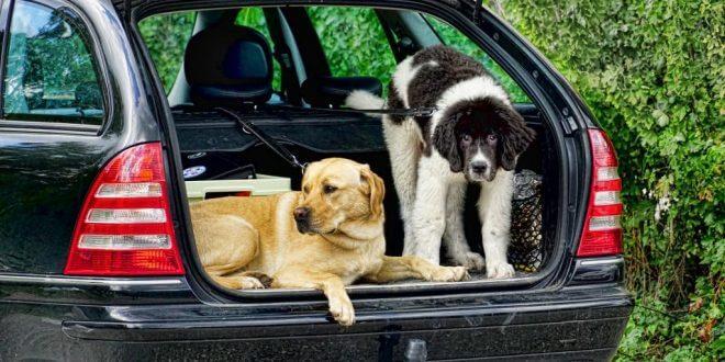 Mit diesem Tipps und Tricks den Kofferraum ordentlich und sauber halten