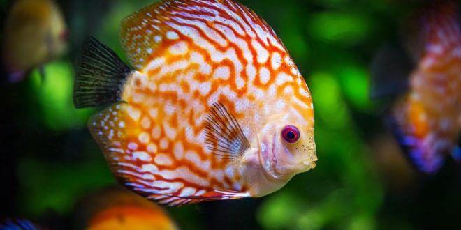 Warum ein Aquarium im Büro gut sein kann