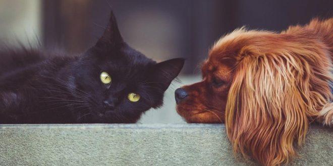 Stress und gesundheitliche Probleme bei Haustieren – was tun?