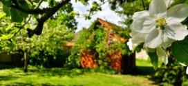Verschiedene Arten von Gartenhäusern und wie Sie eines für Ihren Garten auswählen