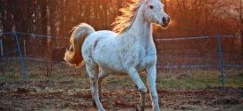 Tipps für den Pferdekauf