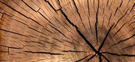 Stressfreies Holzspalten – So einfach geht's!