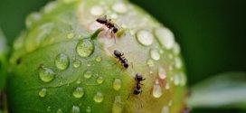 Erste Hilfe bei Ameisen im Haus und im Garten