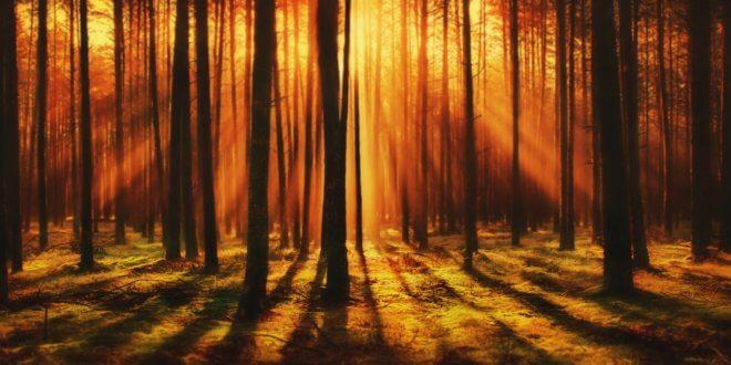 Lebensbaum statt Tierkreiszeichen: Was ist dran am Baumhoroskop?