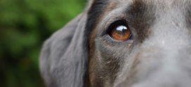 Vorteile und Verwendung von CBD für die Gesundheit der Hunde