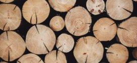 Nachhaltigkeit im Bereich der Möbel – auf Massivholz setzen